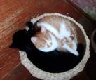 Jijo und Blacky