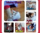 Kitty und ihre 4 Kindchen
