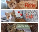 Boris, Bob, Bounty