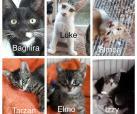 6 Katzenbabies