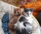 Micky & Daisy