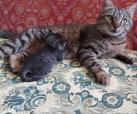 5 Babys
