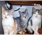 Elly, Sammy, Bobby