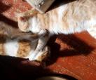 Jijo und Leo